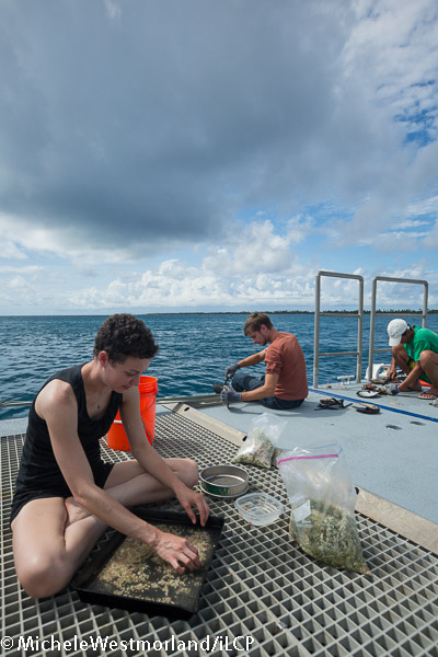 Collection team - Jenna, Simon and Gaby sifting through sand, algae and oysters for interesting creatures.