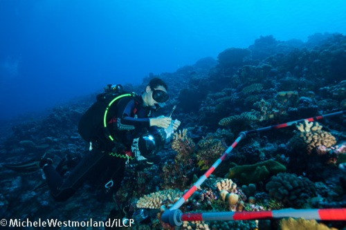 Joao Monteiro from the Azores, is using a transect grid, camera and sampling bags.