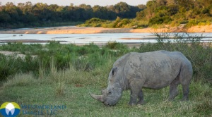 ZAF_Rhino_0055